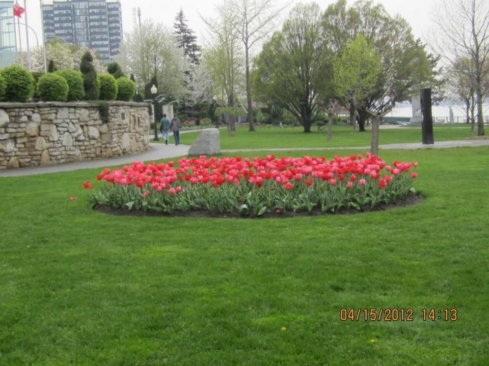 Dieppe Park Tulips