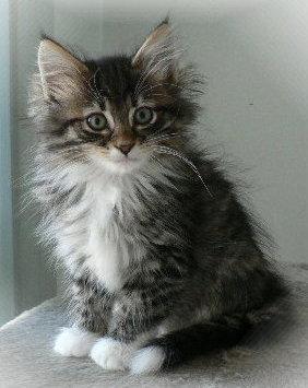 Felix kitty