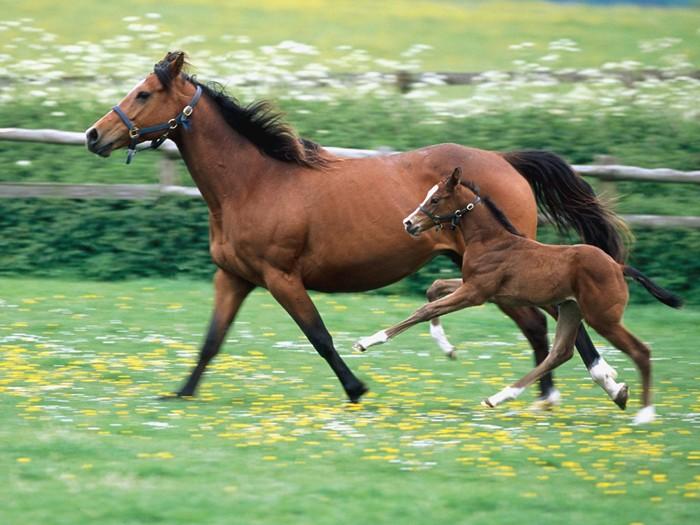 Horse mum