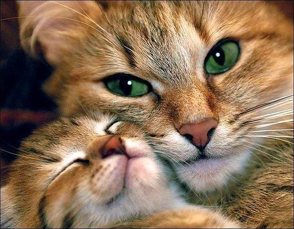 Kitty mum