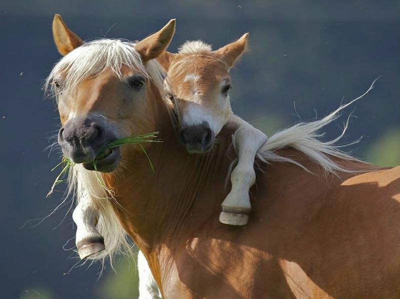 Pony mum